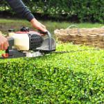 Hecken schneiden – So wird es gemacht
