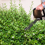 Gesetzliche Bestimmungen beim Hecke schneiden – wann ist das schneiden erlaubt?
